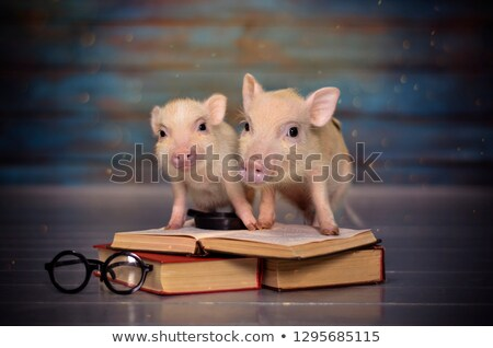 disznó · könyvek · illusztráció · tart · iskola · boldog - stock fotó © colematt