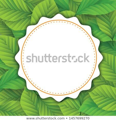Round Emblem Green Beech Leaves Cover Stock photo © limbi007