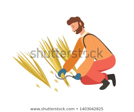 Agricultural Worker Cutting Straw by Scythe Vector Stock photo © robuart