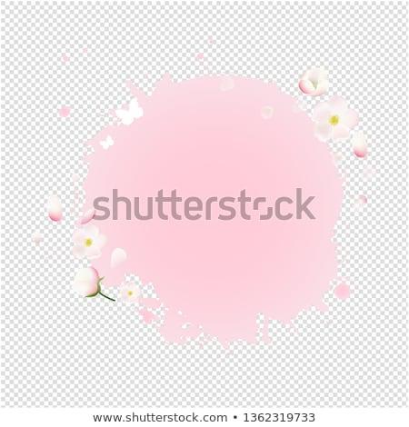 Foto d'archivio: Rosa · macchia · fiori · vendita · banner · trasparente