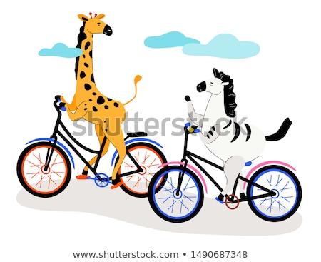 zebra and giraffe cycling   modern flat design style illustration stock photo © decorwithme