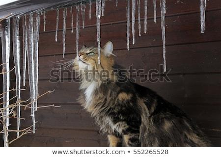 Goot ijs schade dak koud detail Stockfoto © pancaketom