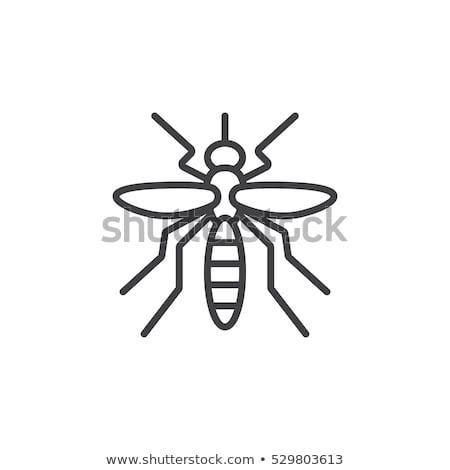 Sıtma sivrisinek ikon vektör örnek Stok fotoğraf © pikepicture