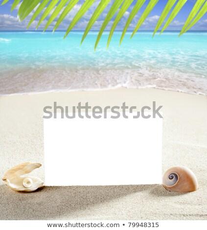 copia · spazio · estate · sabbia · spiaggia · conchiglie · perla - foto d'archivio © lunamarina