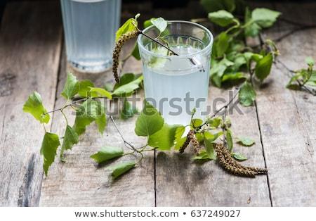 береза сока традиционный русский весны пить Сток-фото © furmanphoto
