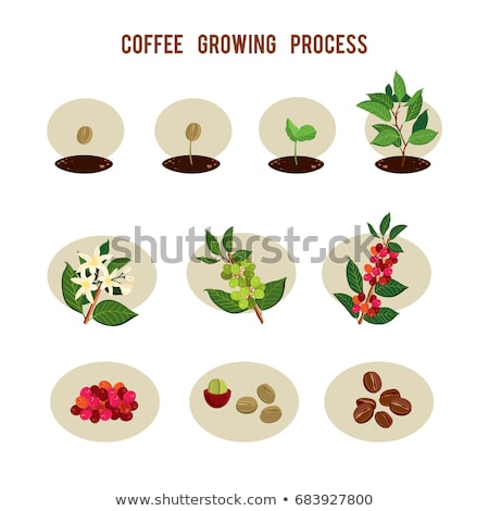 Coffee tree icon stock photo © sifis