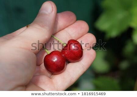 anime · kéz · női · fehér · természet · gyümölcs - stock fotó © pzaxe