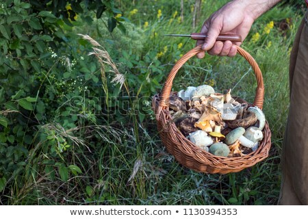 handful of fresh wild mushrooms stock photo © ruslanomega