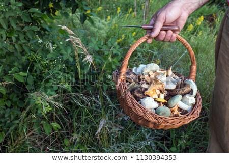 handful of fresh wild mushrooms Stock photo © RuslanOmega