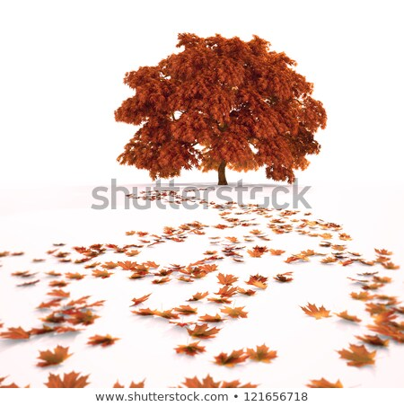 A single, orange, fallen autum leaf Stock photo © TheFull360