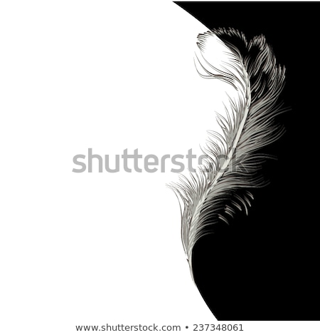 Abstract feather in black frame. Elements for design. Vector illustration. stock photo © prokhorov