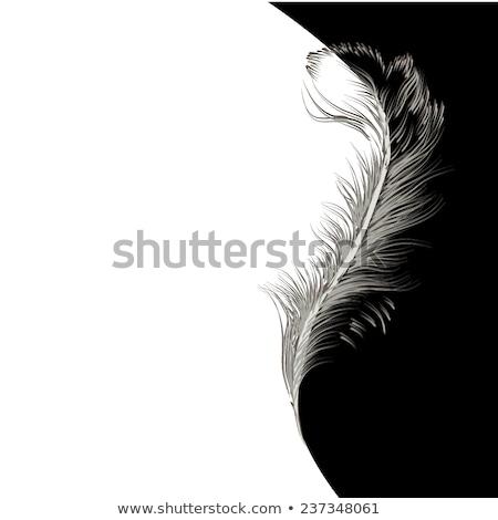 аннотация Перу черный кадр Элементы дизайна Сток-фото © prokhorov
