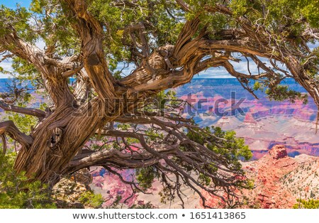 Ağaç şube doğa yeşil Stok fotoğraf © Lessa_Dar