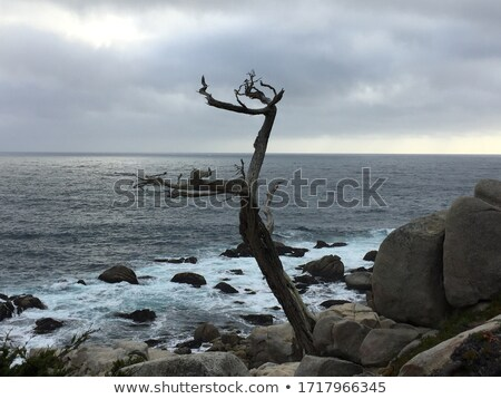 The Ghost Tree at 17 Mile Drive Stock photo © wolterk