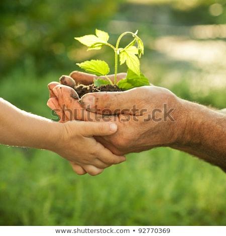 ludzka · ręka · zielone · liści · wzrostu - zdjęcia stock © mikko