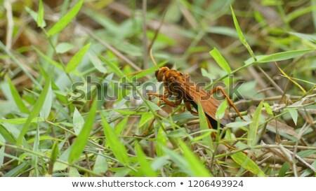 tarântula · falcão · aranha · vespa · laranja · em · pé - foto stock © rhamm