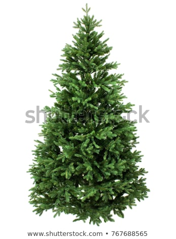 Fir-tree Isolated on White Background. Stock photo © tashatuvango