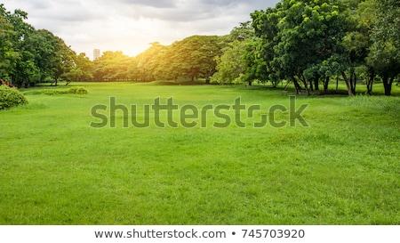 picnic zone stock photo © cosma