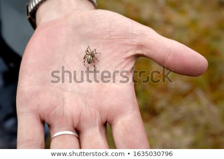 Spider in hand Stock photo © ChilliProductions
