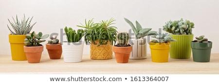 Yellow Flower Pot Stock photo © cosma