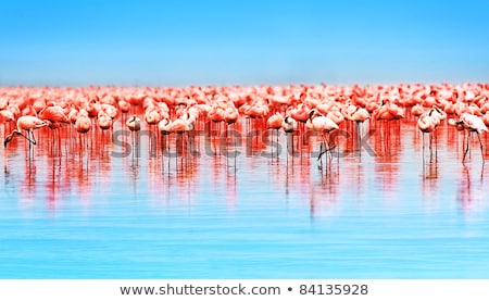 a group of pink flamingo in natural environment stock photo © pilgrimego
