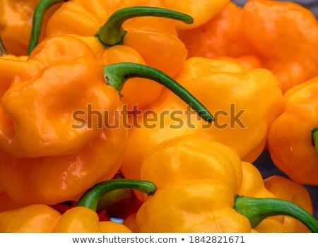 Vermelho pimenta pimenta fundo salada asiático Foto stock © lucielang