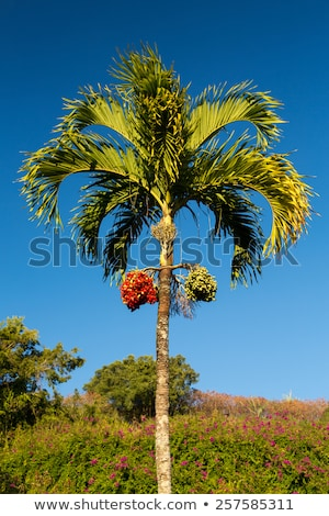 noz · árvore · crescente · tropical · comida · folha - foto stock © backyardproductions