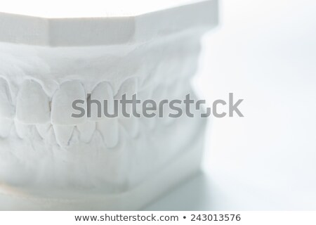 gypsum model of human jaw on a white background stock photo © sarymsakov