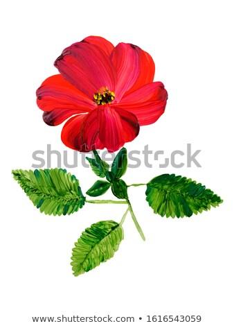 Hibiszkusz virágok vászon kép illusztráció virágmintás Stock fotó © Irisangel