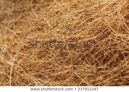 Tangle Fibre Texture Stock photo © rghenry