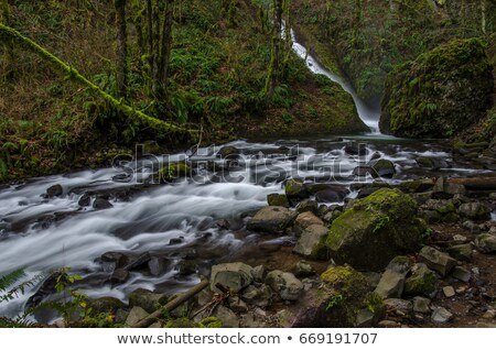 misty stream with autumn colours leaves and pebbles stock photo © rekemp