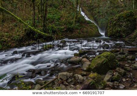 misty · stream · autunno · colori · foglie · ciottoli - foto d'archivio © rekemp
