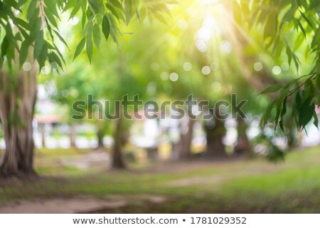 resumen · hadas · fondos · diseno · cielo · árbol - foto stock © stephanie_zieber