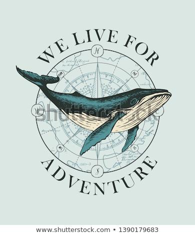 klasszikus · tengerészeti · címkék · szett · retro · jelvények - stock fotó © netkov1