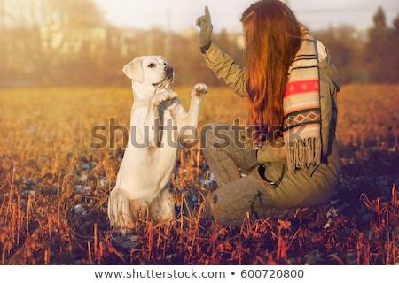 homem · cão · pôr · do · sol · ilustração · silhueta · treinamento - foto stock © adrenalina