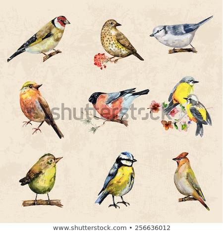 Aranyos kártya madár tavasz háttér minta Stock fotó © kariiika