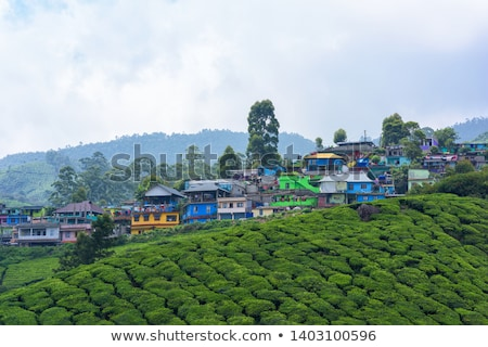 tea plantations munnar india stock photo © juhku