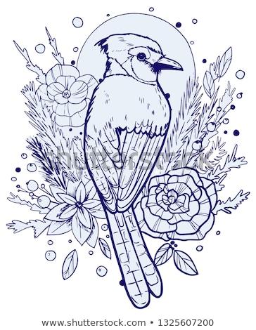 blue jay color illustration stock photo © morphart
