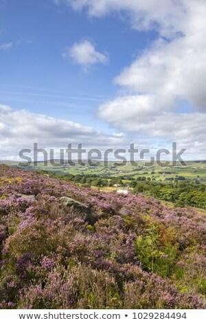 ocidente · yorkshire · 2015 · tempo · flor · belo - foto stock © chris2766