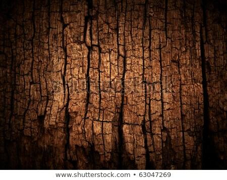 Vieux bois fissuré anneau texture croix coupé Photo stock © skylight
