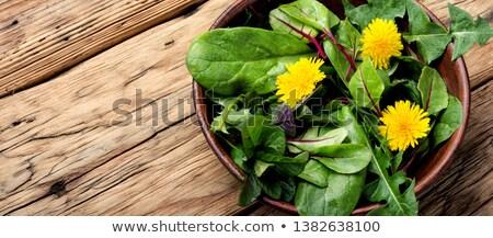 Ehető pitypang levelek saláta konzerv mindkettő Stock fotó © Klinker
