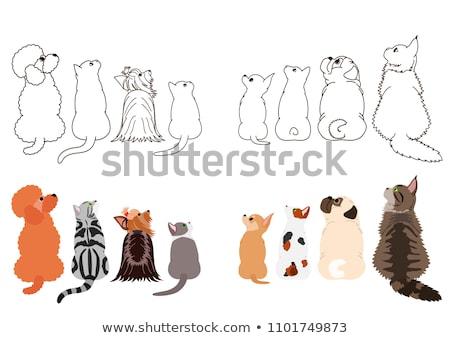 Maine macska barátok állat stúdió kiscica Stock fotó © cynoclub
