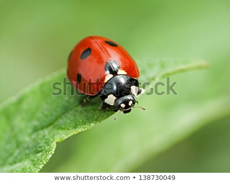 merénylő · rovar · növény · levél · rovar · kint - stock fotó © cienpies