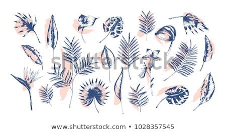 Különböző pálmalevelek illusztráció levél háttér művészet Stock fotó © bluering