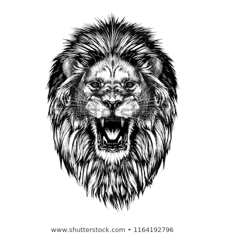 Stock fotó: Mérges · oroszlán · fej · kabala · sportok · fogak