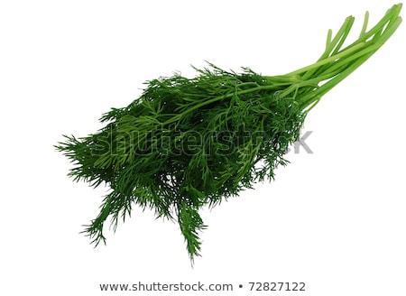 Fresco erva daninha folhas planta Foto stock © Digifoodstock