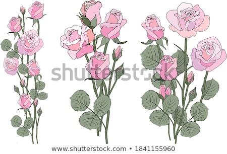 花束 フィールド 花 白 花 葉 ストックフォト © janssenkruseproducti
