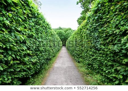 Foto stock: Verde · labirinto · jardim · labirinto · palácio · Viena