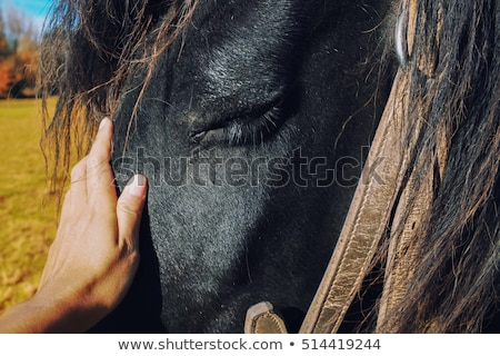 Portrait of a woman stroking the stallion Stock photo © konradbak