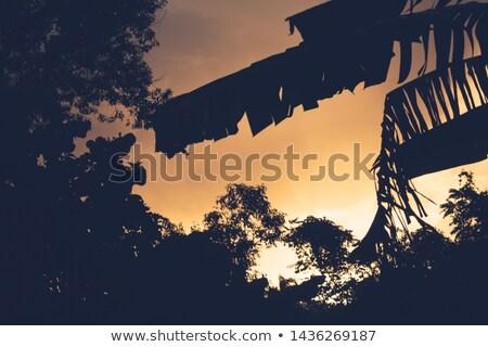 Keret terv bagoly pálmalevelek illusztráció természet Stock fotó © bluering